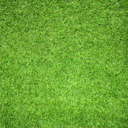 Photograph of astroturf