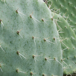 Close up of a Cactus with Spikes