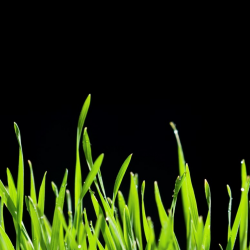Growing business, grass
