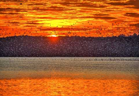 Beautiful sunset with birds over a lake