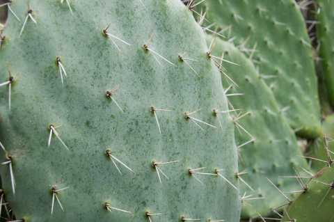 "Cactus image, ""do not touch"""