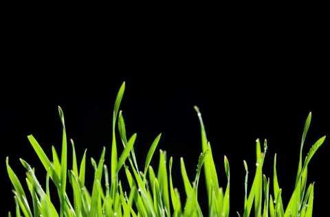Growing business, grass