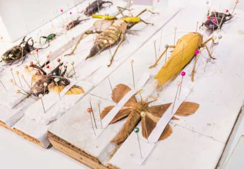 Insect Specimens in Natural Science Museum